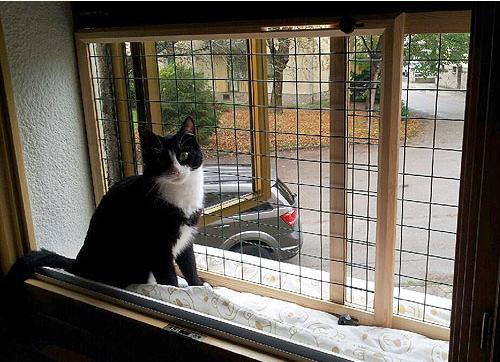 Recinto per gatti chiusura scorrevole - Porta per gatti ...