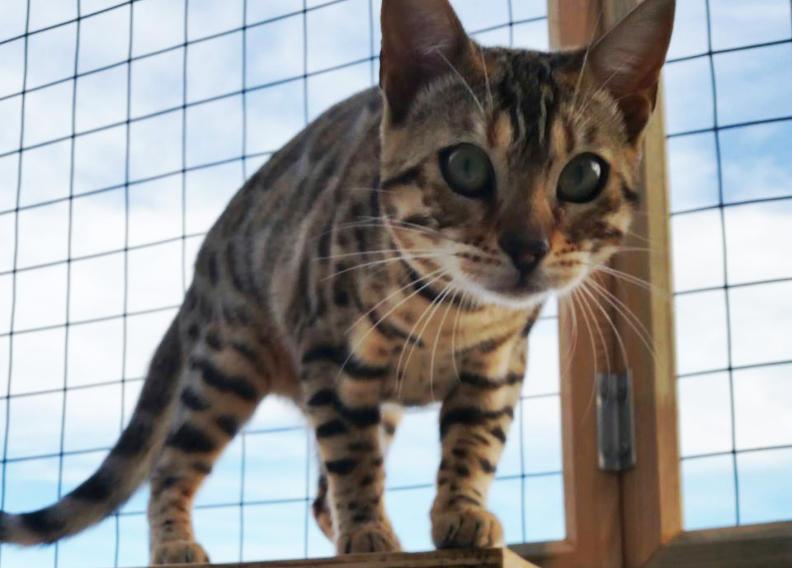 Recinzione Giardino Per Gatti.Recinto Per Gatti Home Page